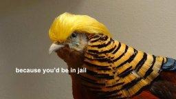 trump-pheasant